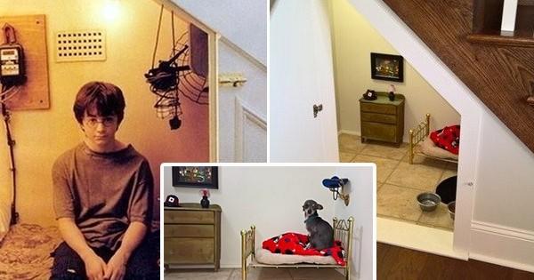 comme dans harry potter cette femme a cr une chambre sous l 39 escalier pour son chien vous. Black Bedroom Furniture Sets. Home Design Ideas