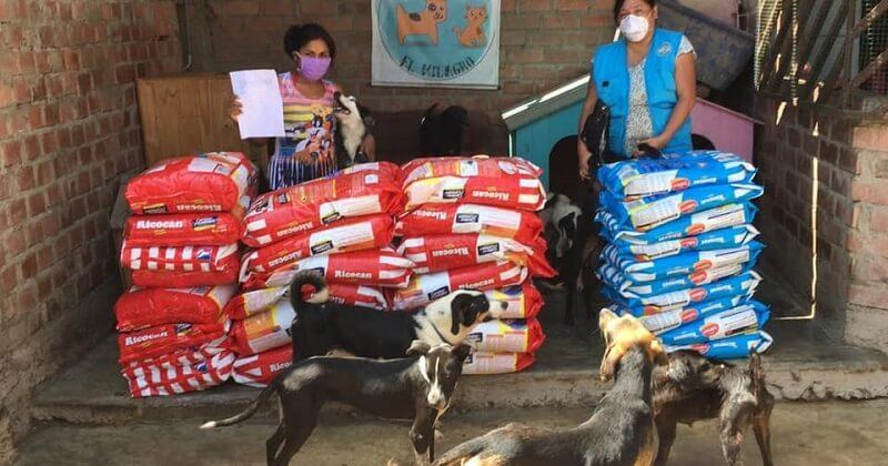Une entreprise de nourriture pour animaux donne 15 tonnes d'invendus pour les chiens et chats errants