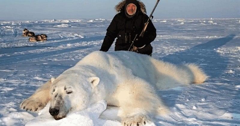 Des touristes prêts à payer 40 000 € pour tuer un ours polaire, le phénomène qui inquiète les scientifiques