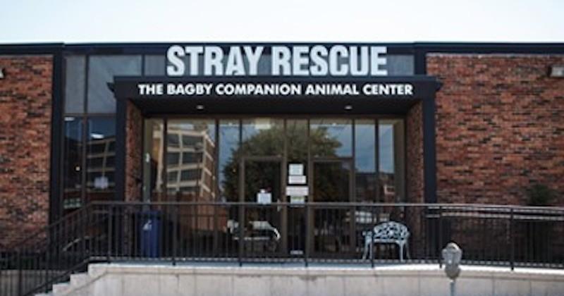 Un refuge sauve deux chiens attachés puis abandonnés par leurs maître
