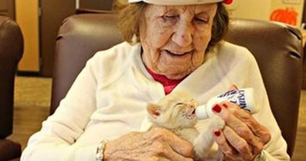 Cette maison de retraite a lancé une collaboration avec un refuge pour animaux pour que les patients atteints d'Alzheimer s'occupent de chatons abandonnés... Adorable !