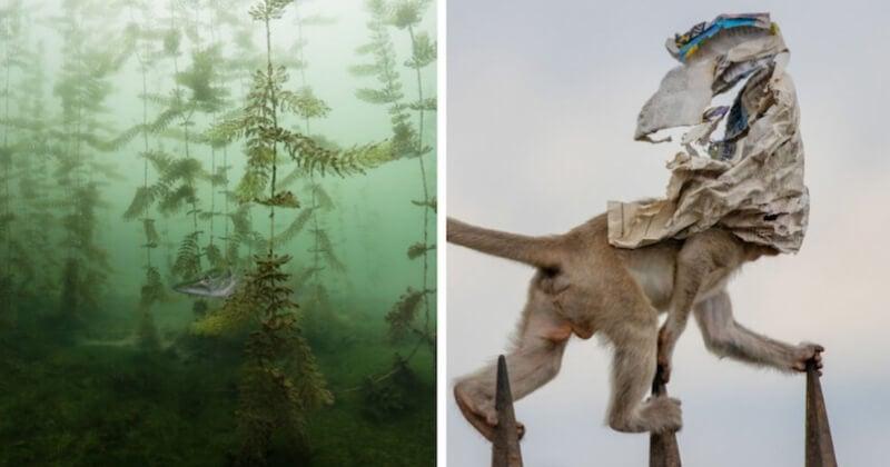 Les plus belles photos de l'année récompensées au concours Nature Photographer of The Year