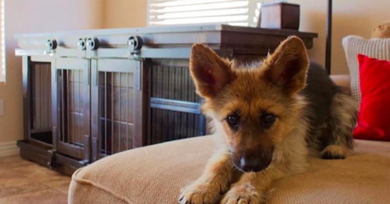 Ce chien atteint de nanisme est adorable !