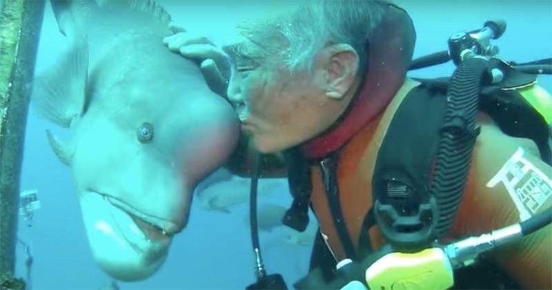 Chaque fois qu'il plonge, ce Japonais retrouve ce poisson qu'il connaît depuis 25 ans... Une amitié éternelle !