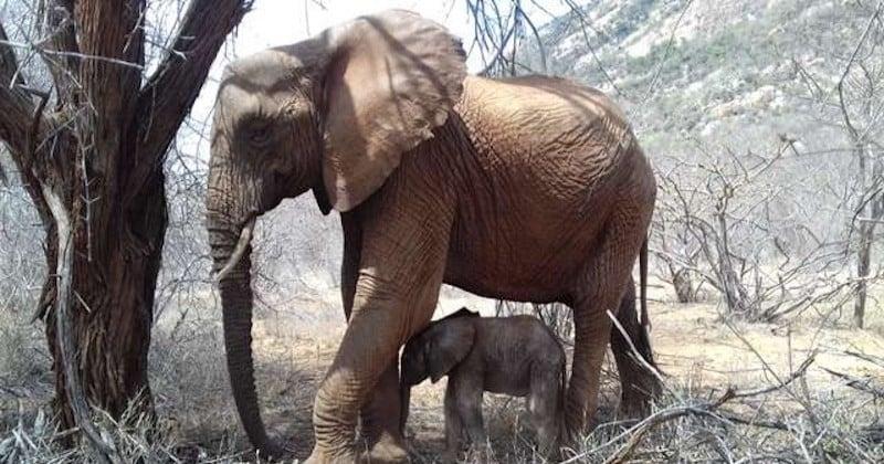 Une maman éléphant rend visite au refuge qui l'a sauvé, accompagnée de son bébé