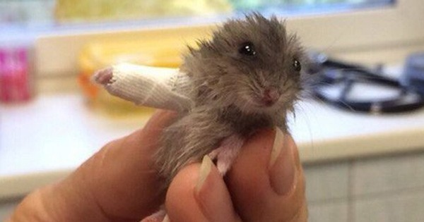 6 animaux trop mignons en convalescence pour mieux reprendre du poil de la bête... Vous allez fondre !