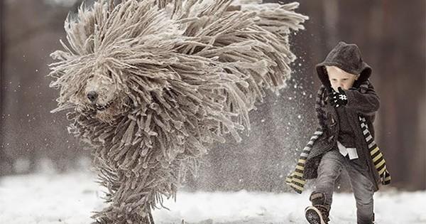 Beauceron | Races de chiens, Chien beauceron, Chien