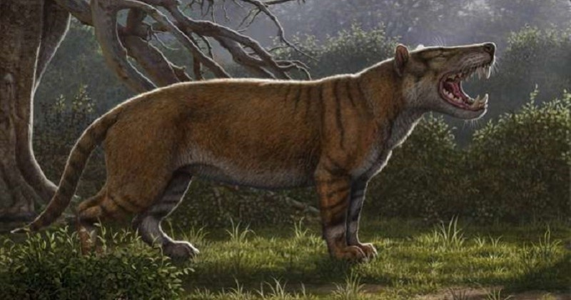 Des fossiles d'un lion géant vieux de 23 millions d'années découverts au Kenya