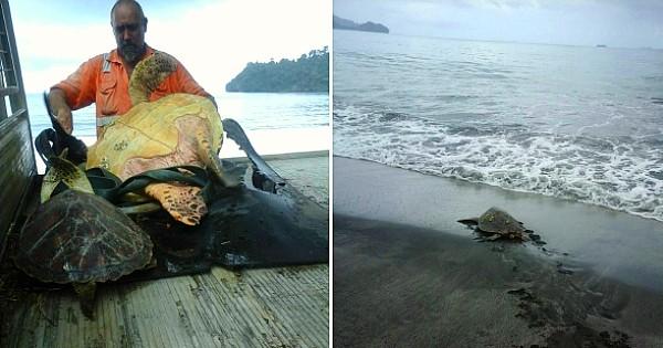 Cet homme achète des tortues de mer protégées sur un marché et les ramène à l'océan pour les libérer ! Un seul mot : RESPECT...