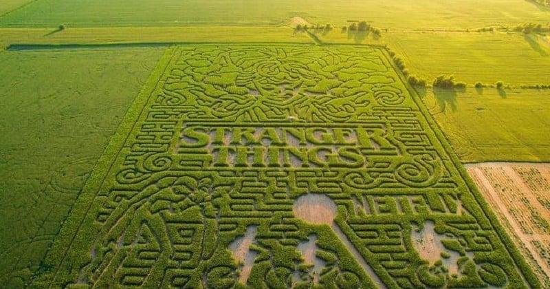 Dans l'Indiana, un labyrinthe géant de maïs rend hommage à la série Stranger Things
