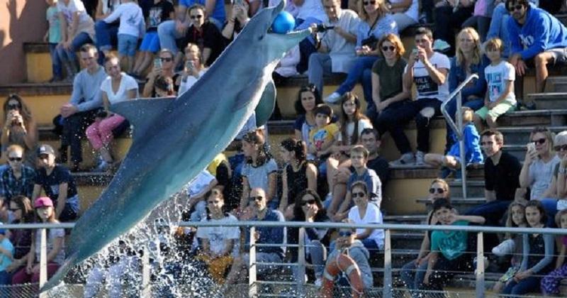 Bien-être animal: les dauphins et otaries du Parc Astérix vont être transférés suite à la fermeture du delphinarium