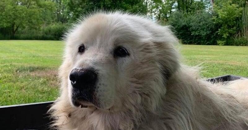 Il abandonne son chien en laissant un mot cruel, rendant furieux les bénévoles d'un refuge