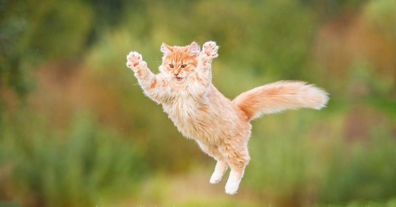 Cette raison qui explique que les chats deviennent « fous » à la tombée de la nuit