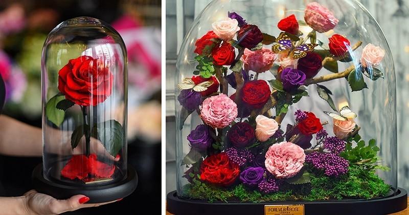 «La Belle et la Bête»: Vous pouvez vous procurer la fameuse rose de «La Bête» et elle aussi est immortelle, (enfin presque)!
