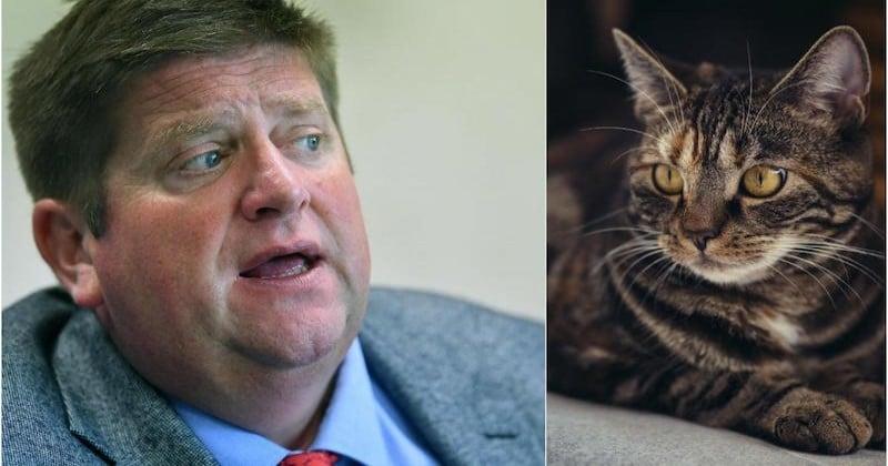 Le patron des chasseurs propose de tuer les chats à 300 mètres des habitations