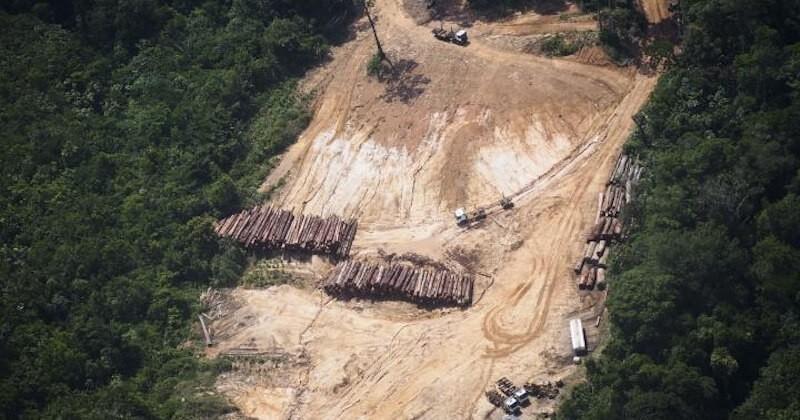 Des indigènes d'Amazonie remportent un procès historique contre la déforestation