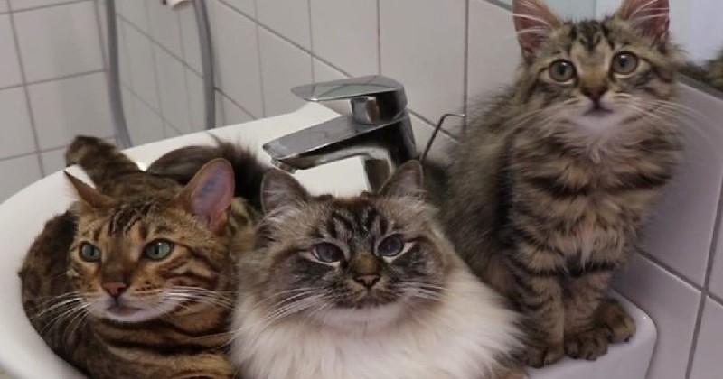Cette famille de chats est réellement atypique !