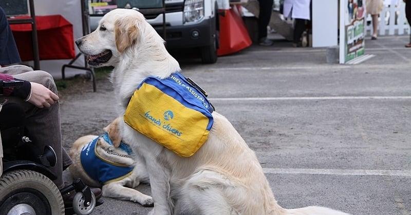 Refoulée d'un buffet à volonté à cause de son chien guide d'aveugle, elle compte porter plainte
