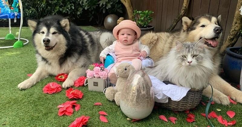 Entouré de deux chiens et un chat, ce bébé a la meilleure famille du monde