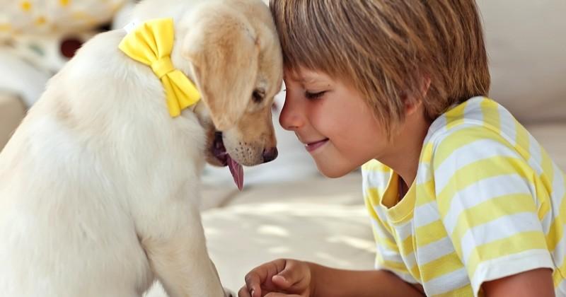 Perdre un animal de compagnie peut être plus difficile à surmonter que la perte d'un être cher