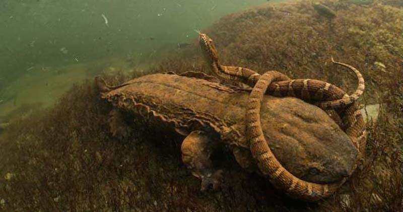 Le concours du « meilleur photographe de la vie sauvage » a récompensé ses plus belles photos