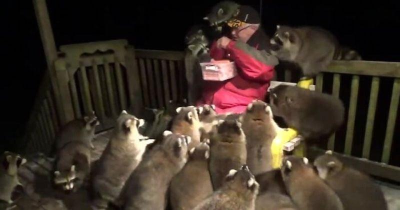 Au Canada, un homme a pris l'habitude de nourrir des ratons laveurs sur le pas de sa porte