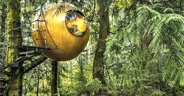 Passer la nuit dans les arbres, vous en avez toujours rêvé ? C'est maintenant possible grâce à cet hôtel au concept unique : préparez-vous !