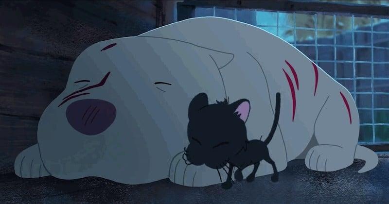 « Kittbull », l'amitié improbable naissante entre un pitbull maltraité et un chaton errant