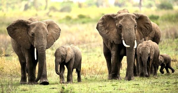 Le plus grand march d 39 ivoire au monde ferme ses portes une nouvelle fantastique pour la - Prenom le plus porte au monde ...