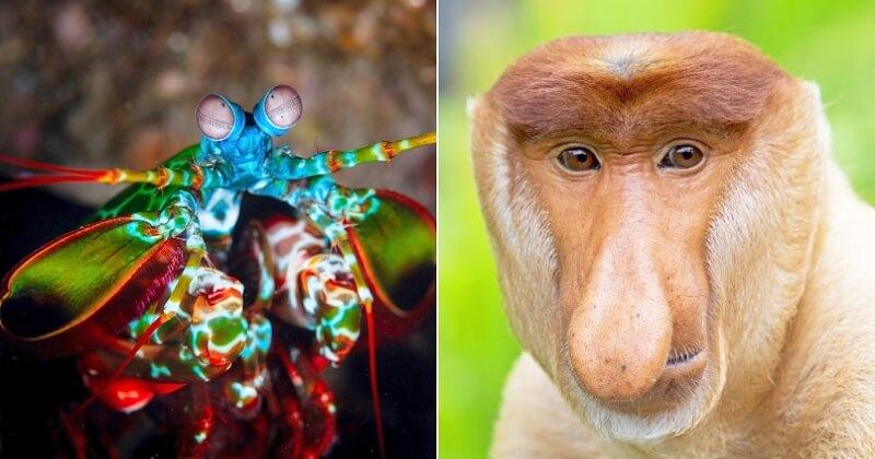 Ces 12 espèces semblent sortir d'un film fantastique, pourtant elles existent vraiment