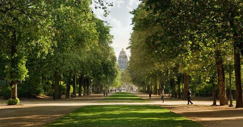 À Bruxelles, un arbre sera planté à chaque naissance d'un bébé