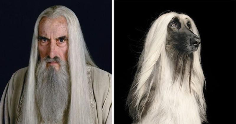 Quand les personnages du Seigneur des anneaux deviennent des... chiens !