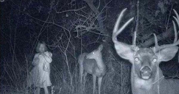 Ces photos prises dans la forêt par des détecteurs de mouvements vont vous glacer le sang