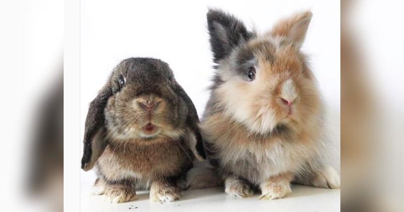 Sumba et Burny, deux adorables lapins débordent d'énergie lorsqu'il s'agit de manger