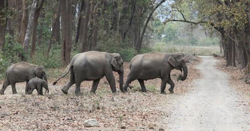 À cause de la déforestation en Inde, une personne meurt chaque jour tuée par les éléphants et tigres