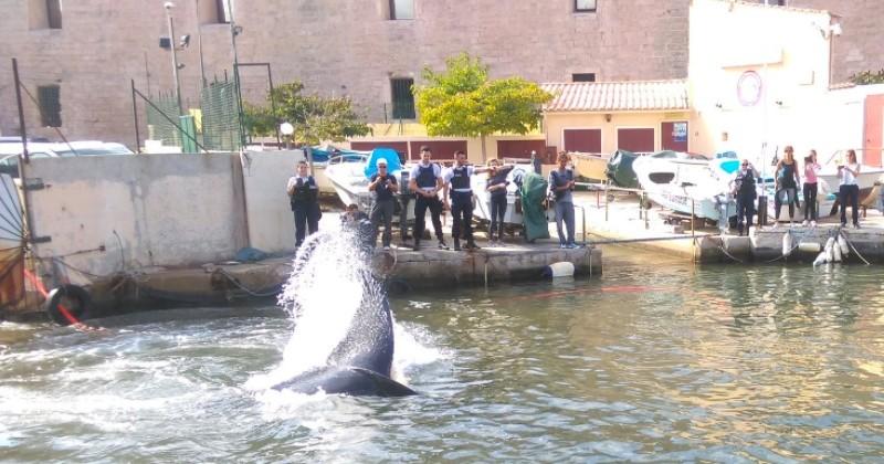 Marseille : Une baleine de 15 mètres de long coincée dans le port