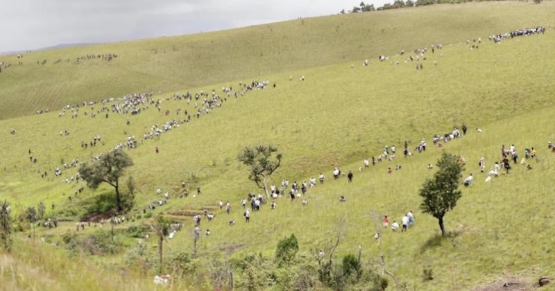 60 millions d'arbres plantés d'ici juin 2020, le défi de taille de Madagascar
