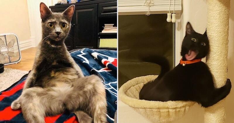 «Qu'est-ce qui ne va pas avec mon chat?»: un groupe d'internautes publie des photos étranges et hilarantes de leurs chats