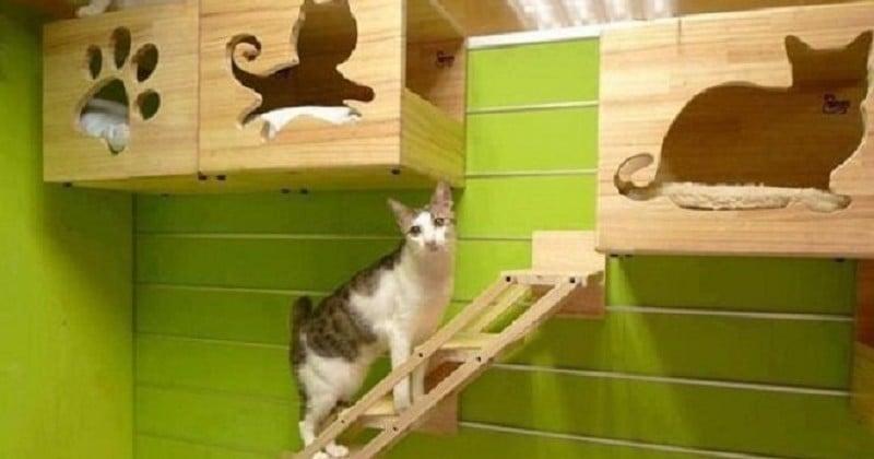 nos animaux de compagnie m ritent le meilleur pour se. Black Bedroom Furniture Sets. Home Design Ideas