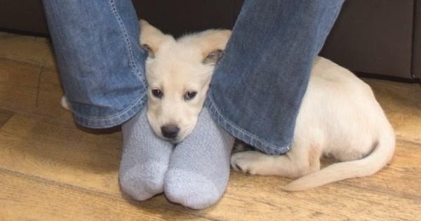 Ces 8 comportements de chien peuvent vous paraître bizarres... Pourtant, ils ont une signification très forte ! Saurez-vous les décrypter ?