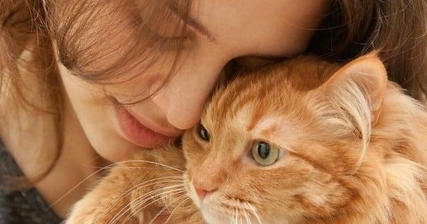 Les chats sont les meilleurs animaux du monde, et voici 9 raisons qui le prouvent par A+B.