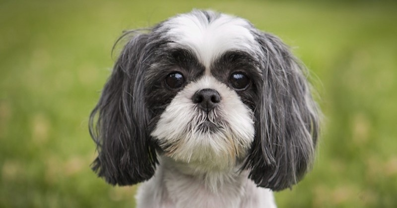 La dernière volonté d'une femme décédée était... d'euthanasier sa chienne, pour qu'elle soit enterrée avec elle