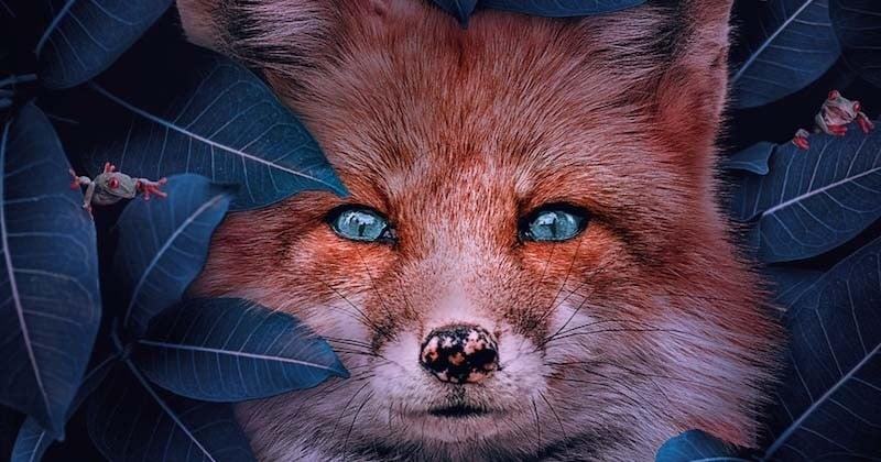 Cet artiste réalise de sublimes images d'animaux en danger d'extinction pour nous sensibiliser à leur sort