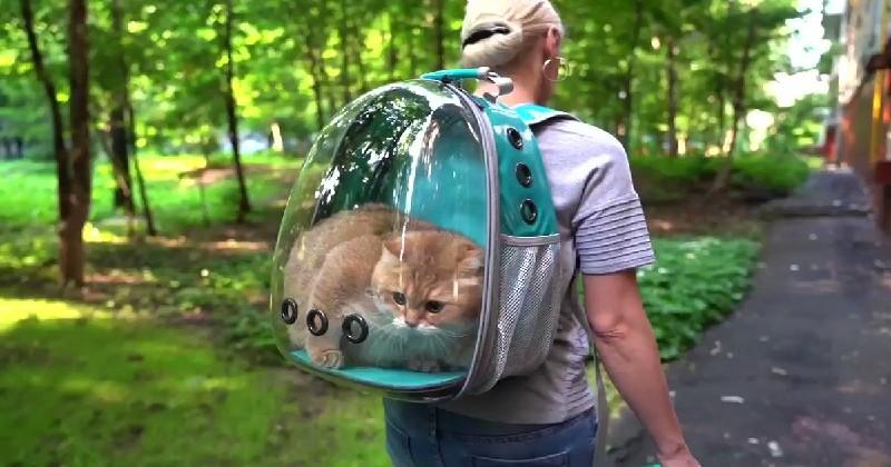 Hosico, le chat qui a un moyen de locomotion hors du commun