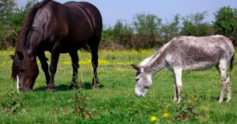 Seine-Maritime : le mystère des chevaux morts à l'oreille coupée continue avec deux nouvelles victimes