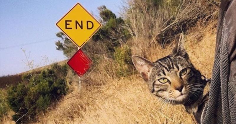 Ces 25 photos vont vous prouver que vous pouvez partir sans problème en camping avec votre chat !