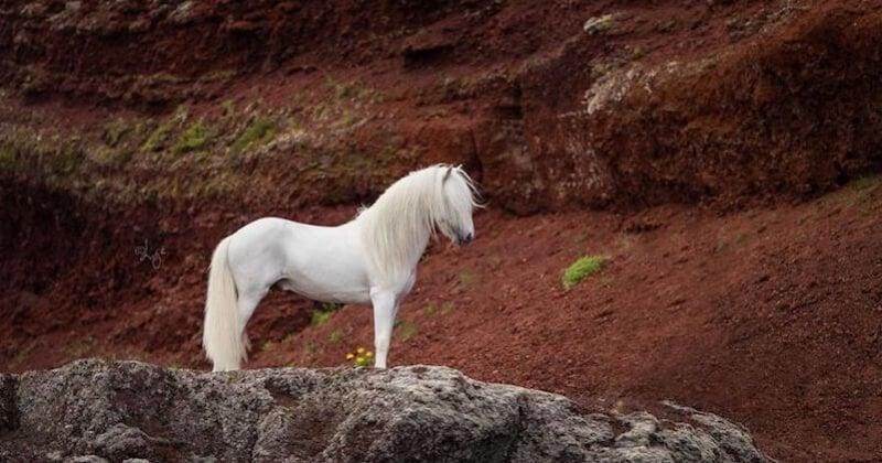 Ces photos de chevaux dans la nature islandaise sont à couper le souffle