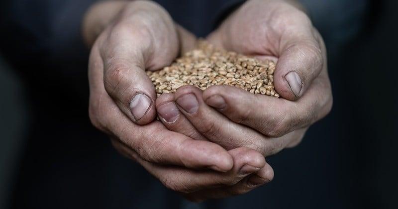 La loi autorise désormais la vente de semences paysannes aux jardiniers amateurs