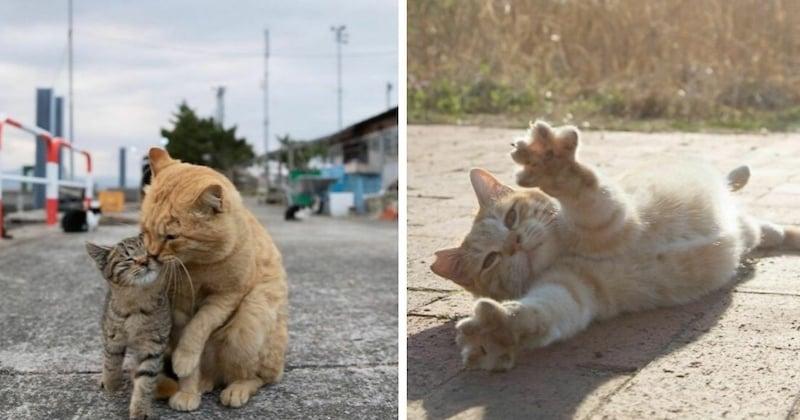 Le quotidien amusant des chats errants du Japon immortalisé par un photographe