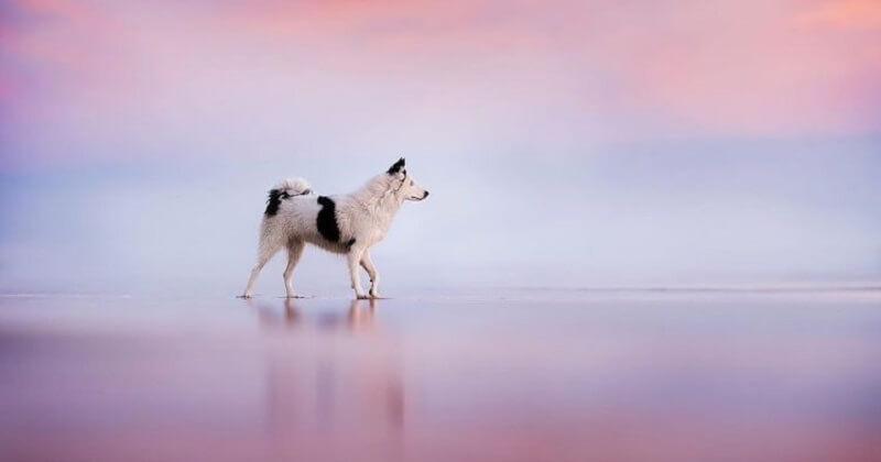 Ces chiens ont été photographiés dans des paysages naturels à couper le souffle